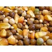 Willsbridge Pigeon Irish Mix Bird Food - 20kg