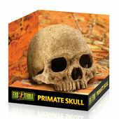 Exo Terra Terrarium Primate Skull