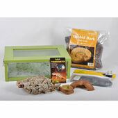 Small Royal Python/Ball Python Starter Kit Monkfield Vivarium Green (18 Inch)