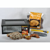 Small Royal Python/Ball Python Starter Kit Monkfield Black Vivarium (18\