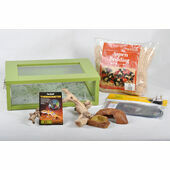 The Pet Express Corn Snake Starter Kit- Green Small Vivarium (18