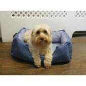 Rosewood Luxury Cool Down Pet Bed