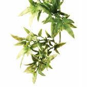 Exo Terra Croton Plant