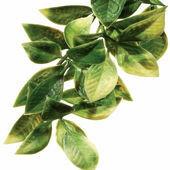 Exo Terra Mandarin Plant