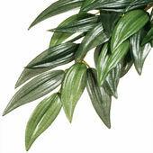 Exo Terra Rucus Silk Plant