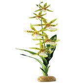 Exo Terra Spider Orchid