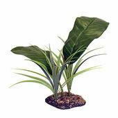 Komodo Evergreen Canopy