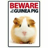 Beware Of The Guinea Pig