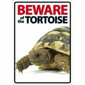 Beware Of The Tortoise