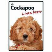 My Cockapoo Lives Here