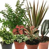 HabiStat Live Plants, Forest Mix, 20 Plants