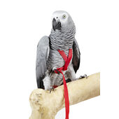 Sky Pet Products Avian Adventure Harness Extra Large Red