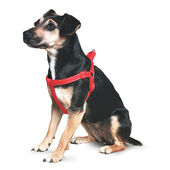 Ancol Nylon Padded Reflective Harness Red