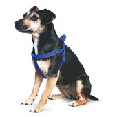 Ancol Nylon Padded Reflective Harness Blue