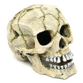 Classic Aquatic Artefacts Cracked Skull 205mm