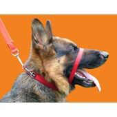 Canny Collar Dog Training Collar Red