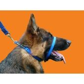 Canny Collar Dog Training Collar Blue