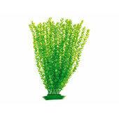 Rosewood Tropix Aquarium Plants Moneywort Giant 50cm