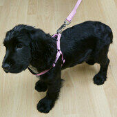 Rosewood Classic Soft Protection Harness Pink X sml