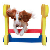 Rosewood Agility Hurdle- For Small to Medium Dogs