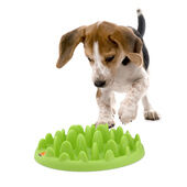 Northmate Green Mini Interactive Slow Feeder