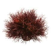 Biorb Easy Plant Sea Lily Crimson