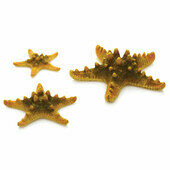 BiOrb Sam Baker Ornamental Sea Stars Yellow