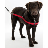 Company Of Animals Red Walkezee Dog Harness
