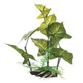 Fluval Plant Anubias Gracilis 22cm