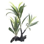 Fluval Plant Root Willow Lf Hygrophila 30cm