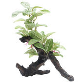 Fluval Plant African Shade Leaf On Log 20cm