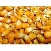 Willsbridge French Maize 20kg