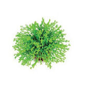 Biorb Easy Plant Topiary Ball Green