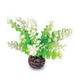 Biorb Easy Plant Green Caulerpa