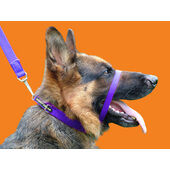Canny Collar Dog Training Collar Purple