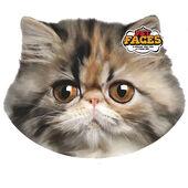 Pet Faces Cushion Persian Cat 45cm