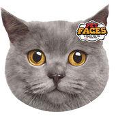 Pet Faces Cushion British Short Hair Cat 45cm