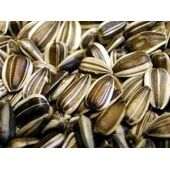 Willsbridge Large/medium Striped Sunflower Seed 12.5kg