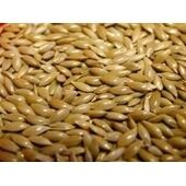 Willsbridge Plain Canary Seed 20kg