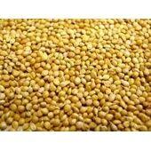 Willsbridge Panicum Millet Seed 20kg