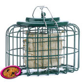 The Nuttery Squirrel & Predator Proof Oval Suet Feeder Ocean Green