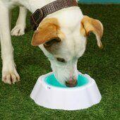 Pet Brands Just Chillin' Cooling Bowl 24cm