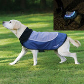 Rosewood Night Bright Blue LED Light Up Dog Jacket