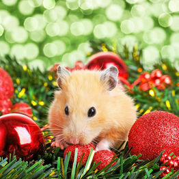 Christmas Gifts For Small Pets
