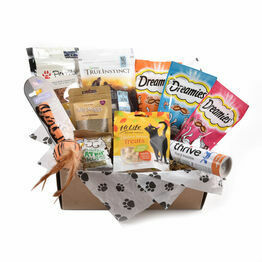 Huge Range Of Cat Amp Kitten Supplies The Pet Express