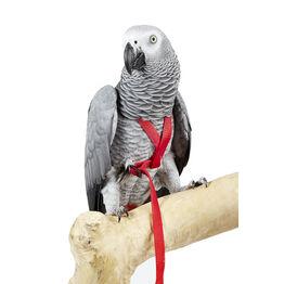 Bird Harnesses & Leads