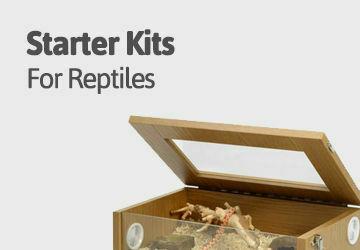 reptile starters