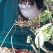 Mr Snugs Katden Outdoor Cat Kennel - Dark Green additional 5