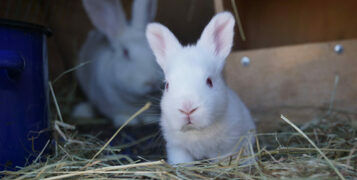 A Beginner's Guide To Keeping Rabbits