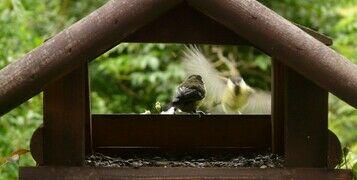 Bird Feeding - Wild Birds Care Guide